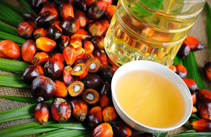 palm oil machine