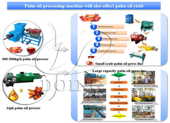 What steps involved in palm oil processing process?