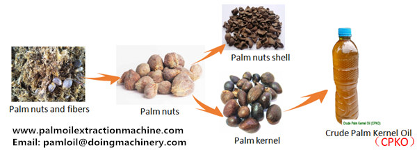 palm kernel oil mill process