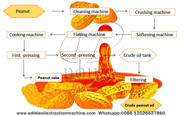 groundnut oil making process